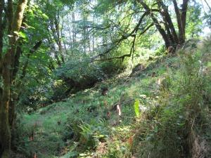 vieew garden north east